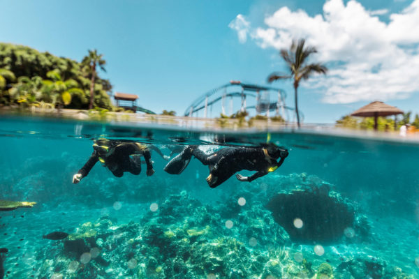 SW-Animal-Adventure-Tropical-Reef-001-sized