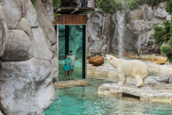 SW-Polar-Bear-Shores-001-sized